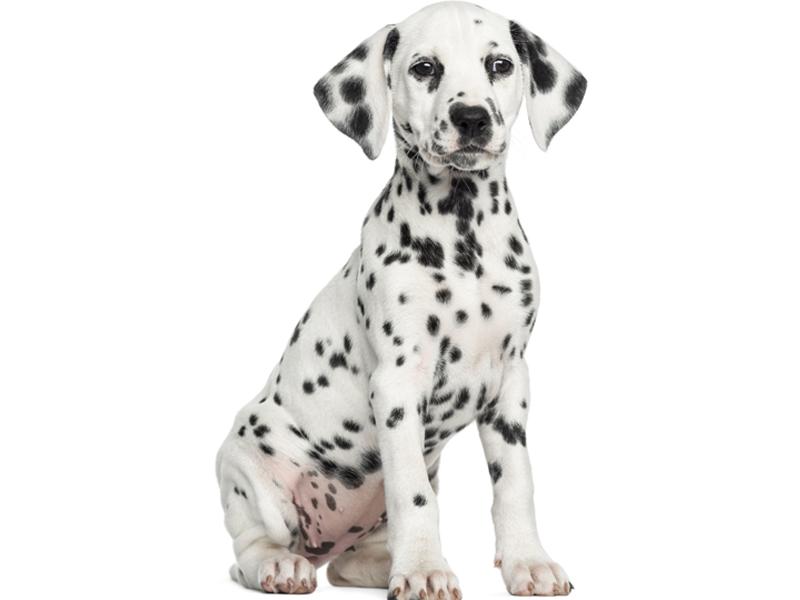 pension chien amboise