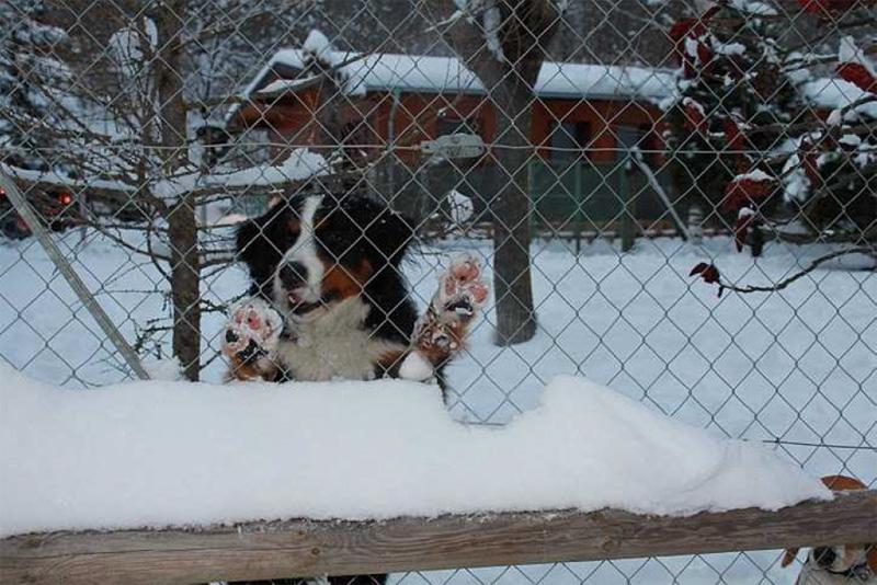 pension chien bourg saint maurice