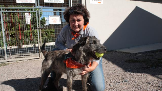 pension chien cabourg