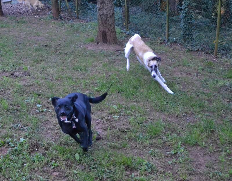 pension chien correze