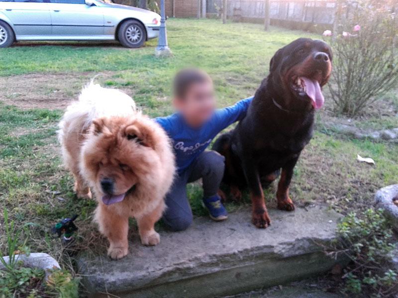 pension chien deux sevres