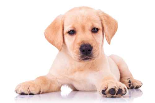 pension chien dijon