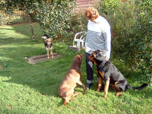 pension chien doubs 25