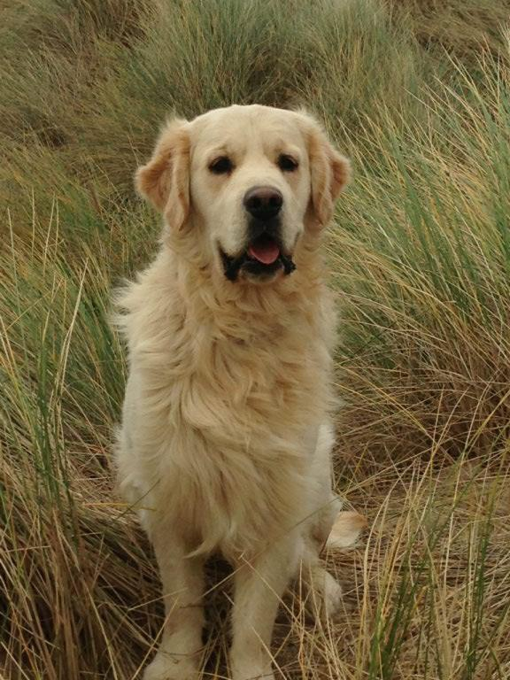 pension chien evreux