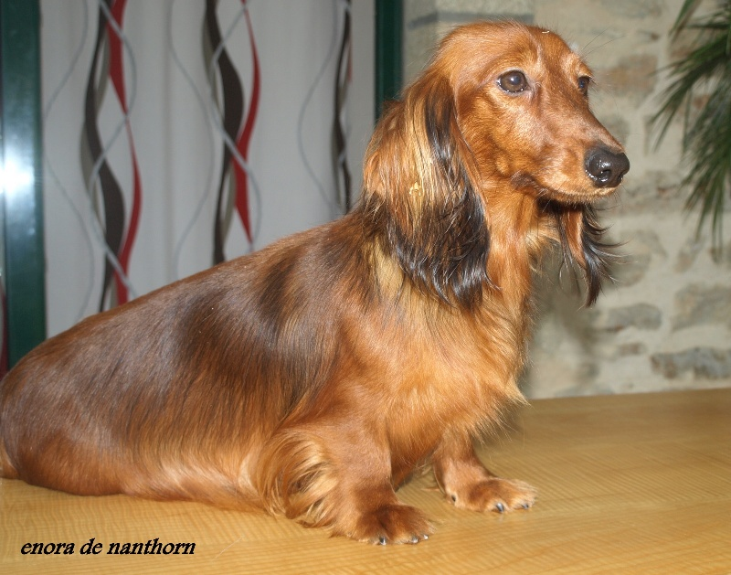 pension chien finistere