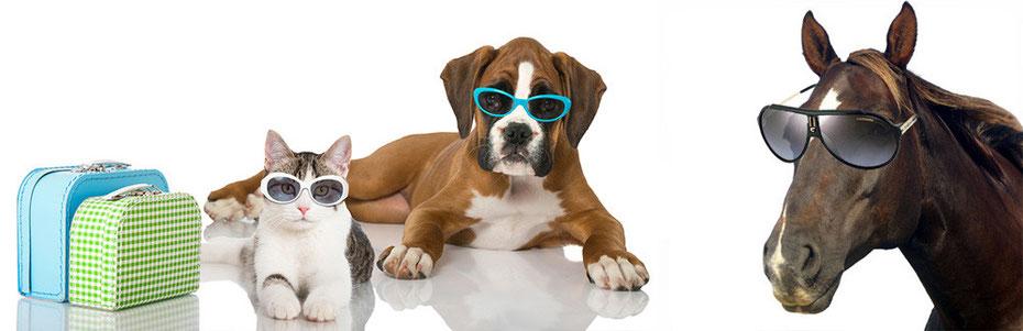 pension chien fontainebleau
