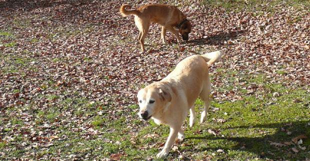 pension chien forest sur marque