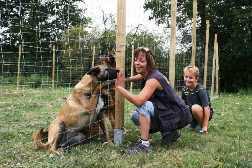 pension chien fougeres