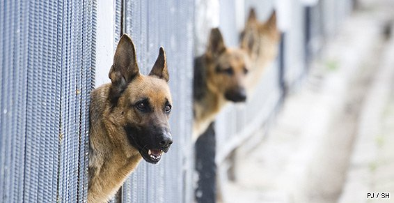 pension chien gournay en bray