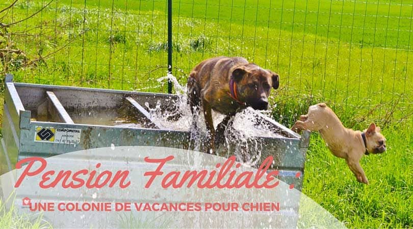 pension chien grenoble