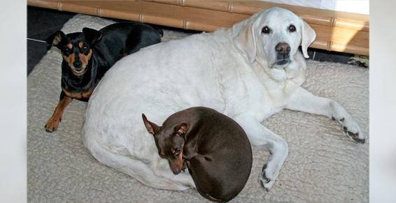 pension chien jodoigne