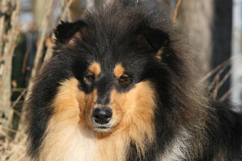 pension chien kortrijk