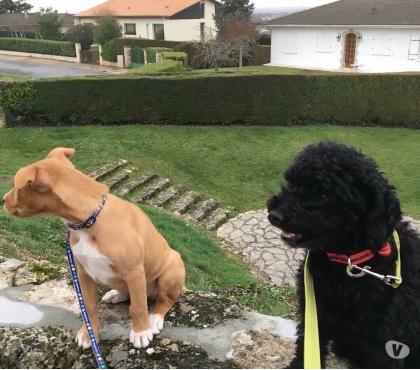 pension chien libourne