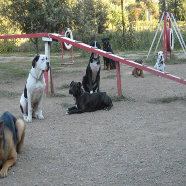 pension chien miramas