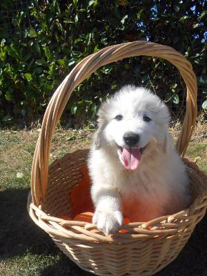 pension chien noyal chatillon sur seiche
