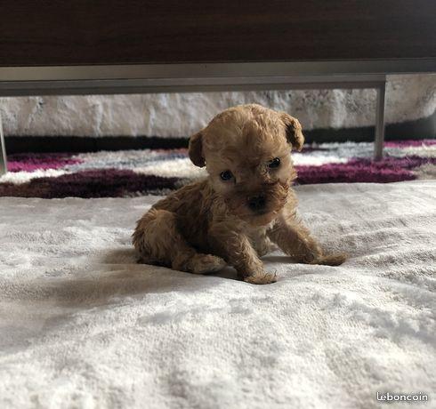 pension chien osthoffen