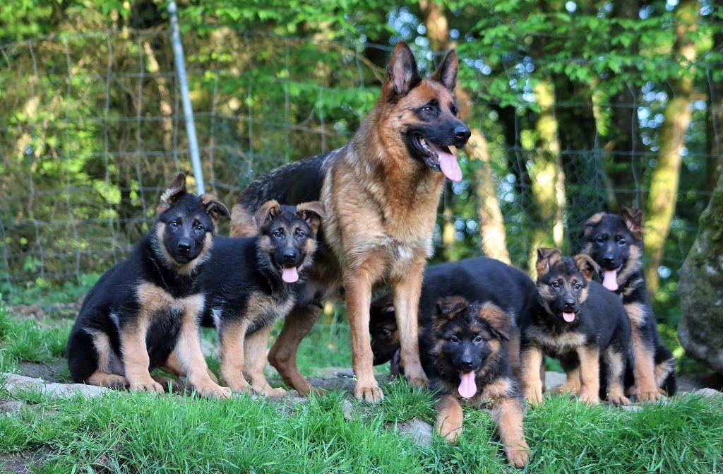 pension chien overijse
