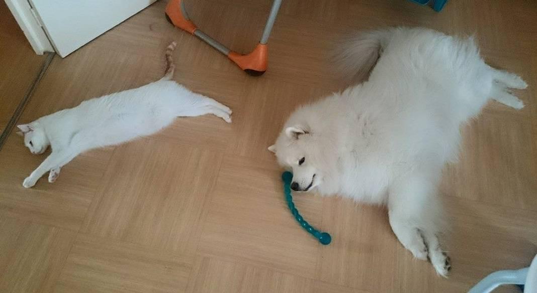pension chien riom
