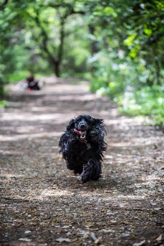 pension chien roquefort les pins