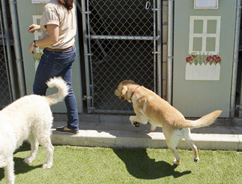 pension chien toul