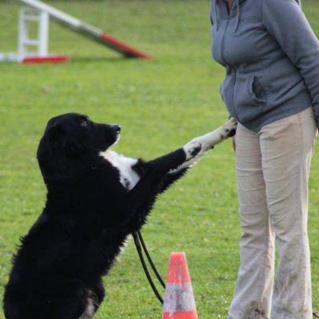 pension chien urimenil