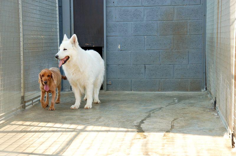 pension chien wavre