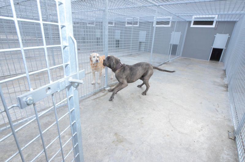 pension chien wintershouse