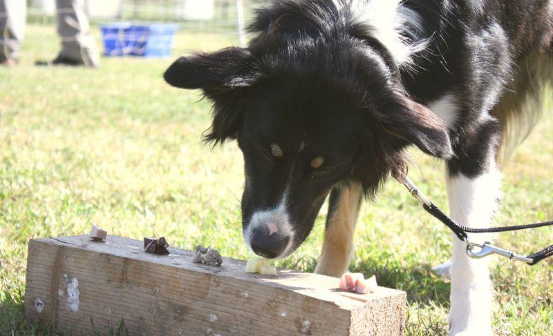 pension chien wissembourg
