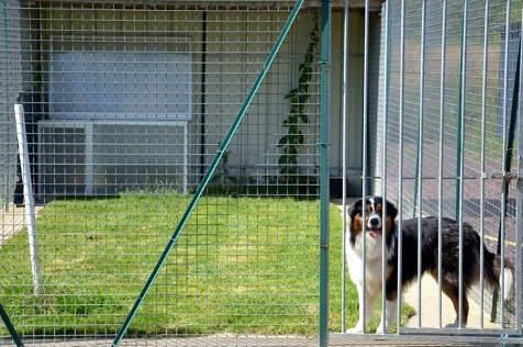 chenil chien 31450