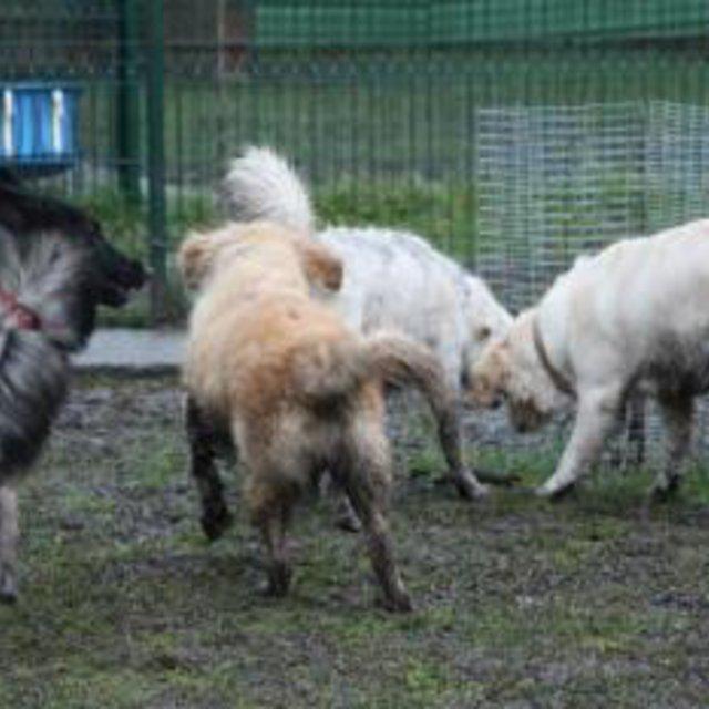 chenil chien gien