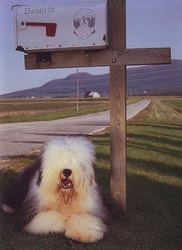 chenil chien granby