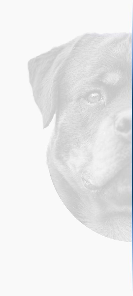 chenil chien guadeloupe