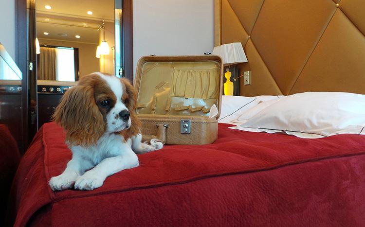 chenil chien hotel