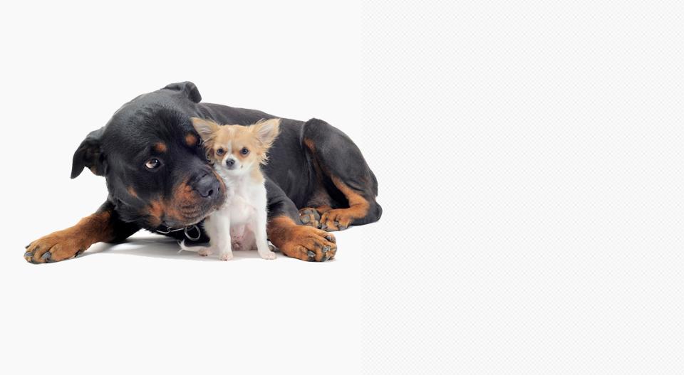 chenil chien ile de re