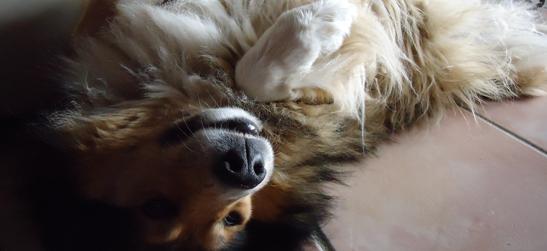 chenil chien sorgues
