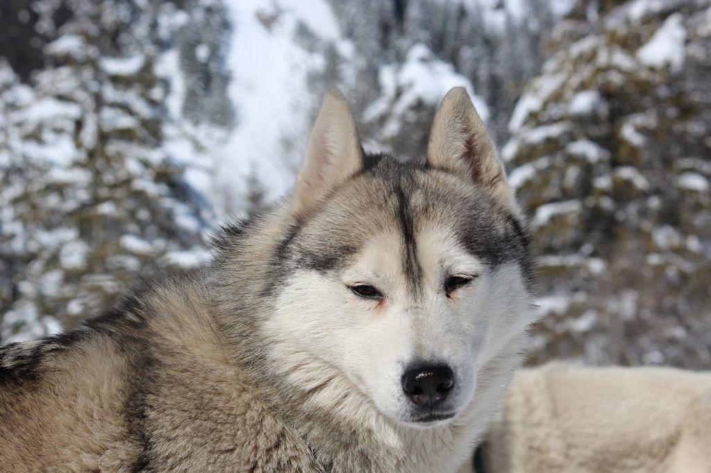 chenil chien yutz