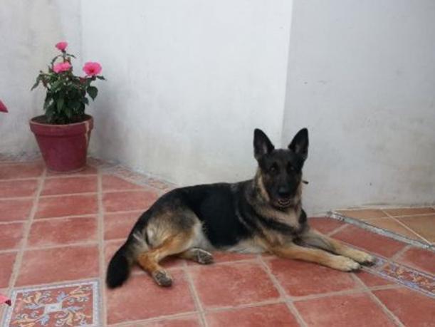 garde chien 18