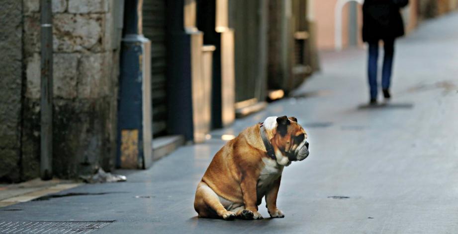 garde chien a nice