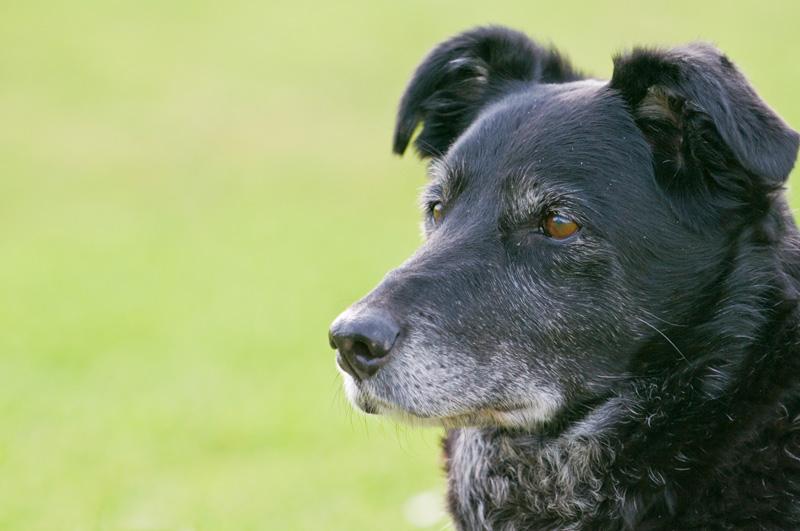 garde chien age