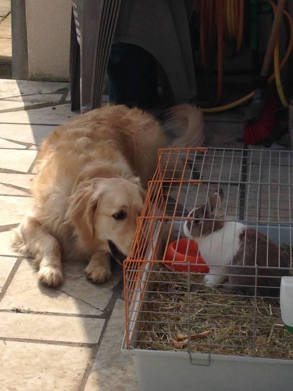 garde chien amboise
