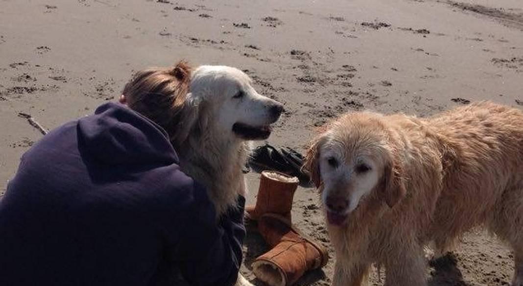 garde chien boulogne sur mer