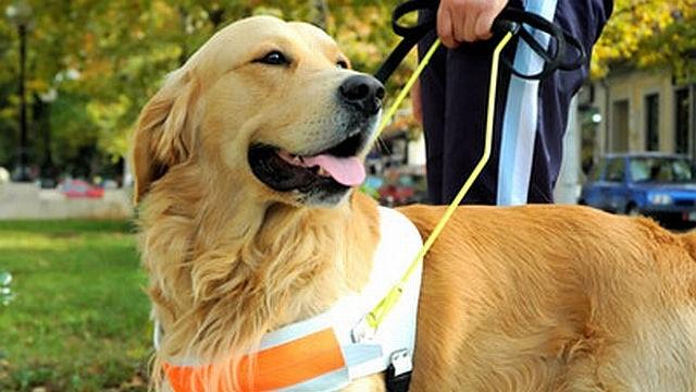 garde chien d'aveugle