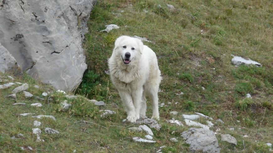 garde chien hautes alpes