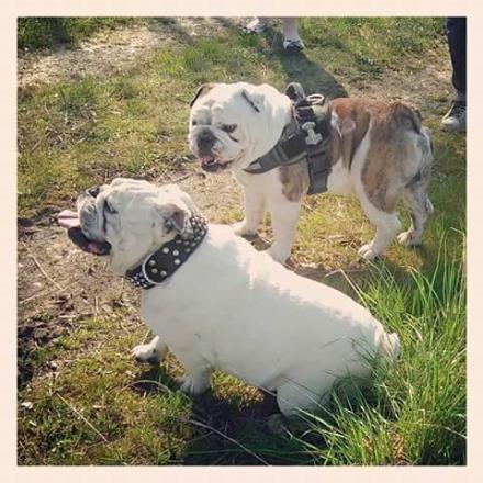 garde chien hautes pyrenees