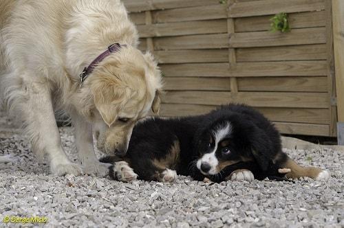 garde chien marseille