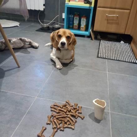 garde chien mulhouse