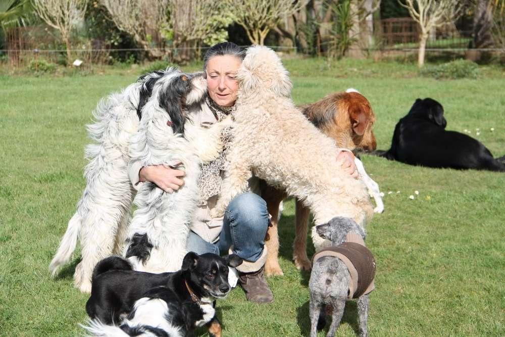 garde chien oloron sainte marie