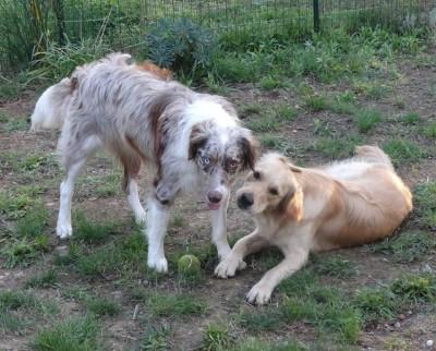 garde chien particulier