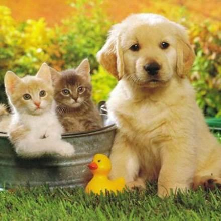 garde chien perigueux
