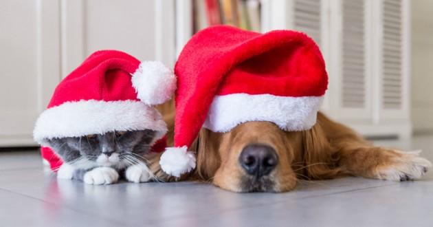 garde chien pour les vacances